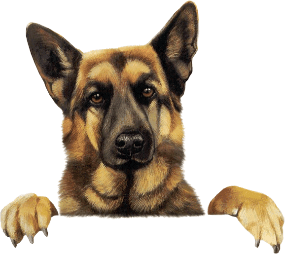 German Shepherd Vector Dog Png Image Puppy Images German Shepherd Dogs Dog Pictures