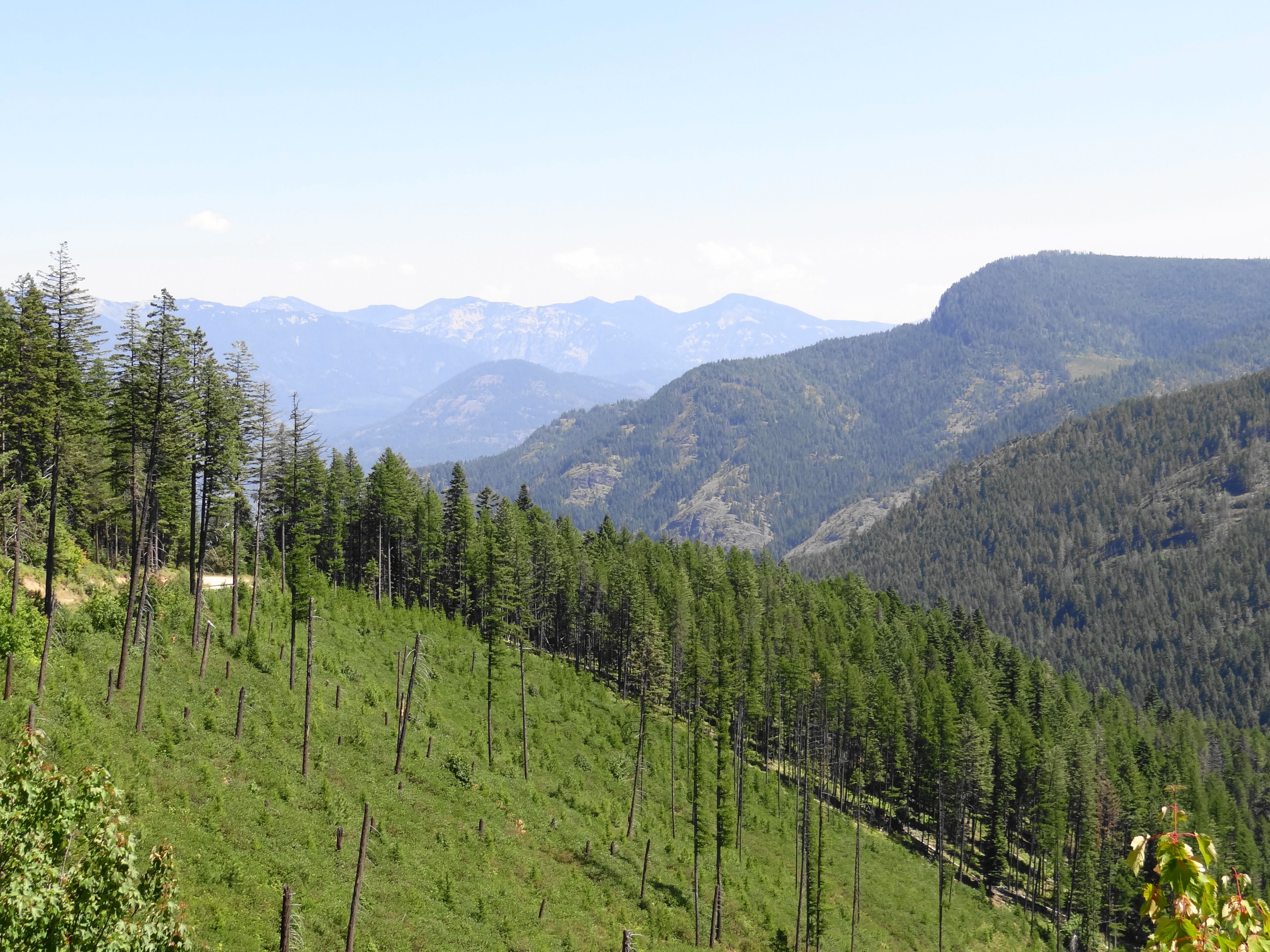 Lovely Along A Forest Service Road Deep In The Cabinet Mountains Of Northern Idaho.  ~~