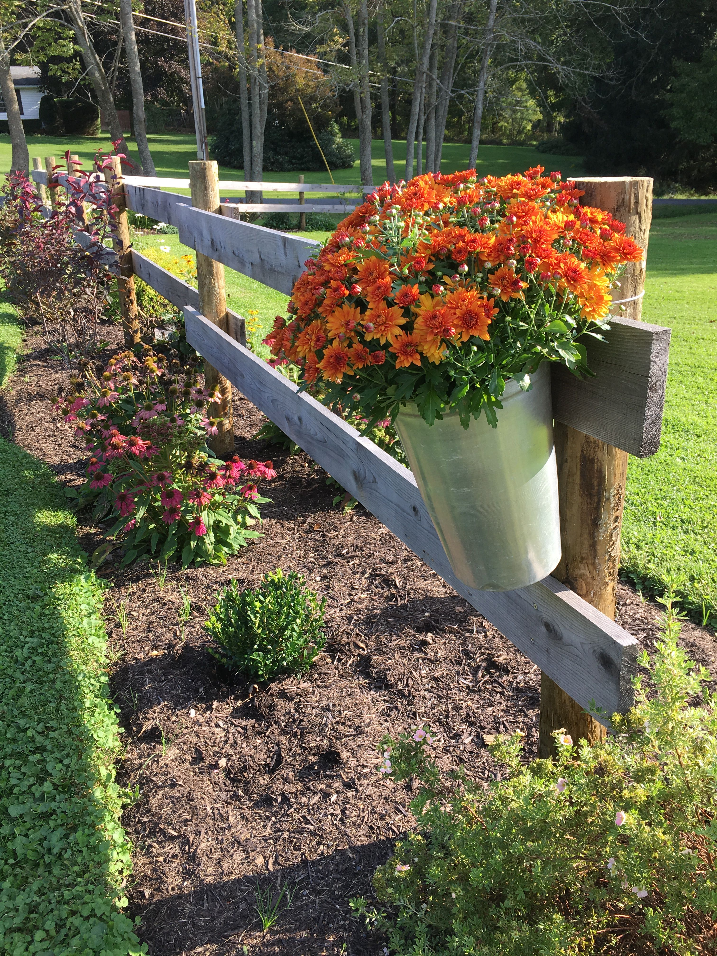 Fall Mums In A Sap Bucket Fall Landscaping Front Yard Small Garden Landscape Fence Landscaping