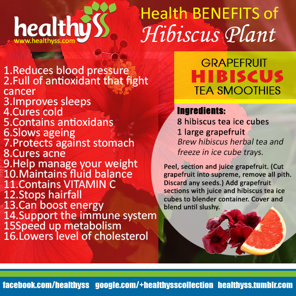 16 Health Benefits Of Hibiscus Plant Hibiscus Plant Health Herbalism