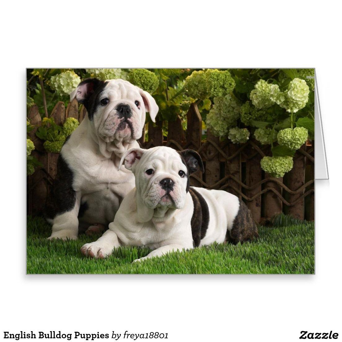 English Bulldog Puppies Zazzle Com In 2020 English Bulldog Puppies English Bulldog Dog Bulldog Puppies