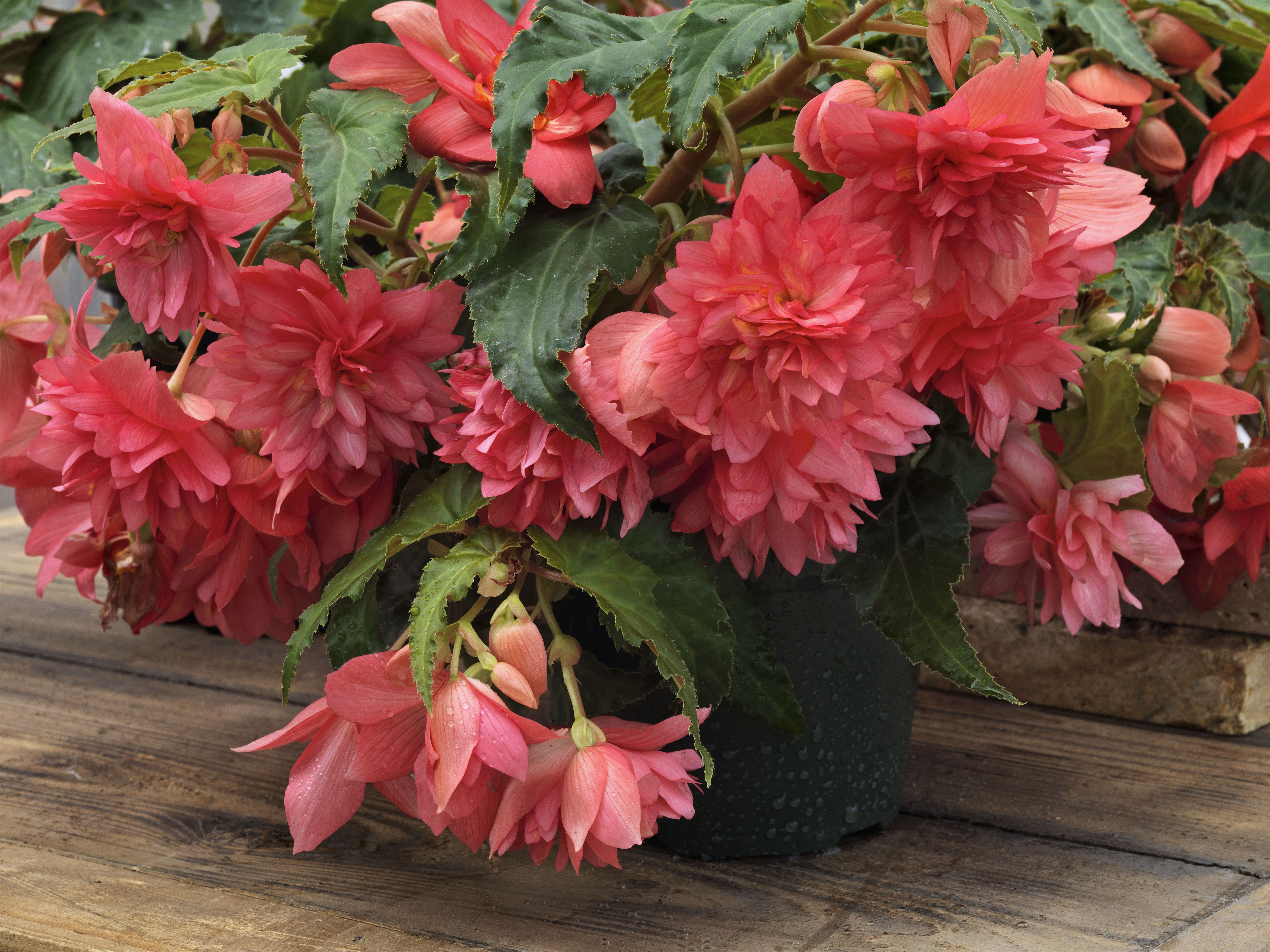 Find This Pin And More On Patio Pots And Containers By Nationalgarden.