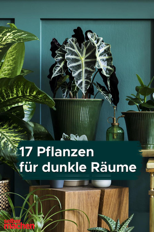 20 Zimmerpflanzen für dunkle Räume   Plants are friends, Plants ...