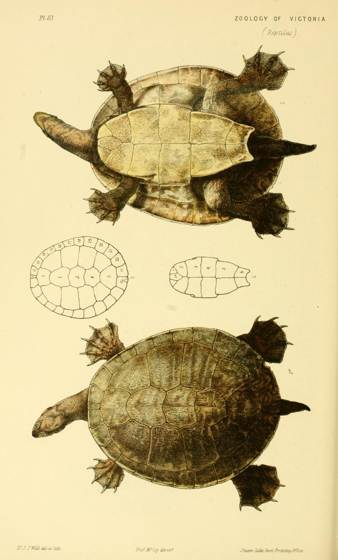 Decade 6-10 - Natural history of Victoria. - Biodiversity Heritage ...
