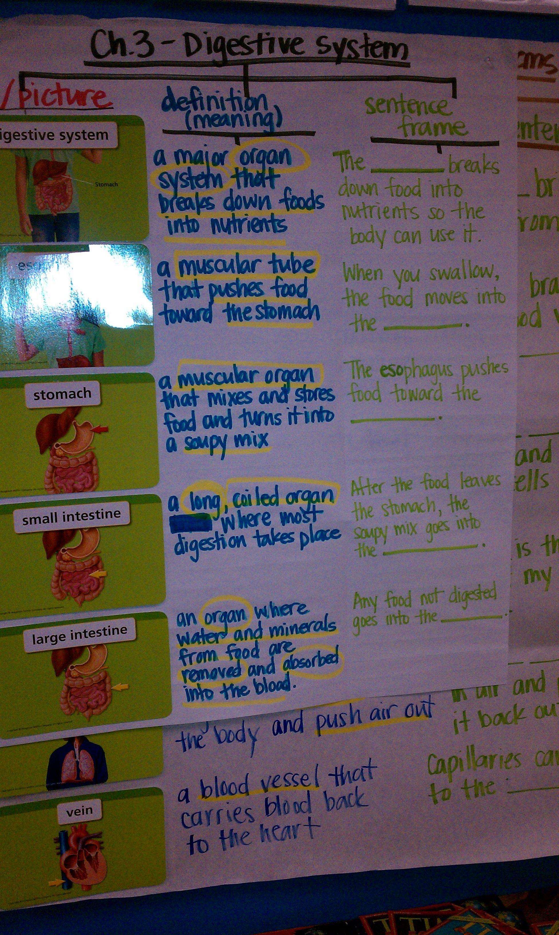 Digestive System 5th Grade Education Science Pinterest Body