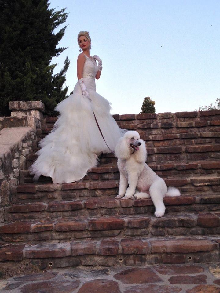 Wedding poodle
