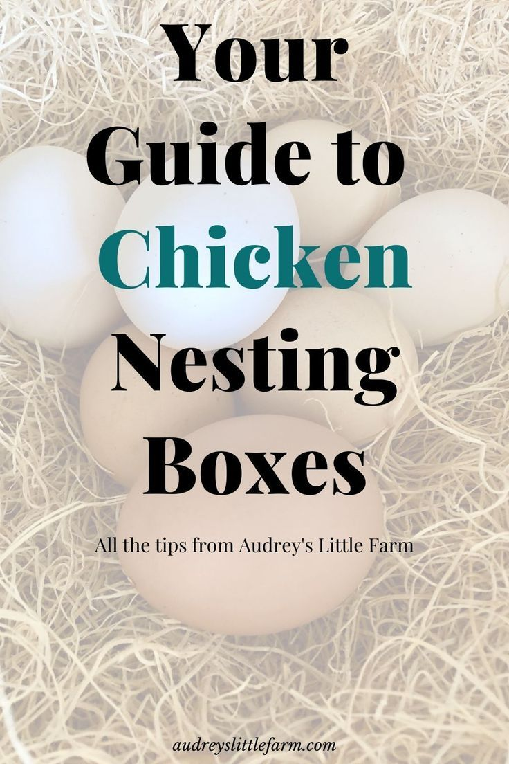 All the information you need about chicken nesting boxes. Ideas for building them, what to put inside the boxes, plus more! #audreyslittlefarm #chickennestingboxes