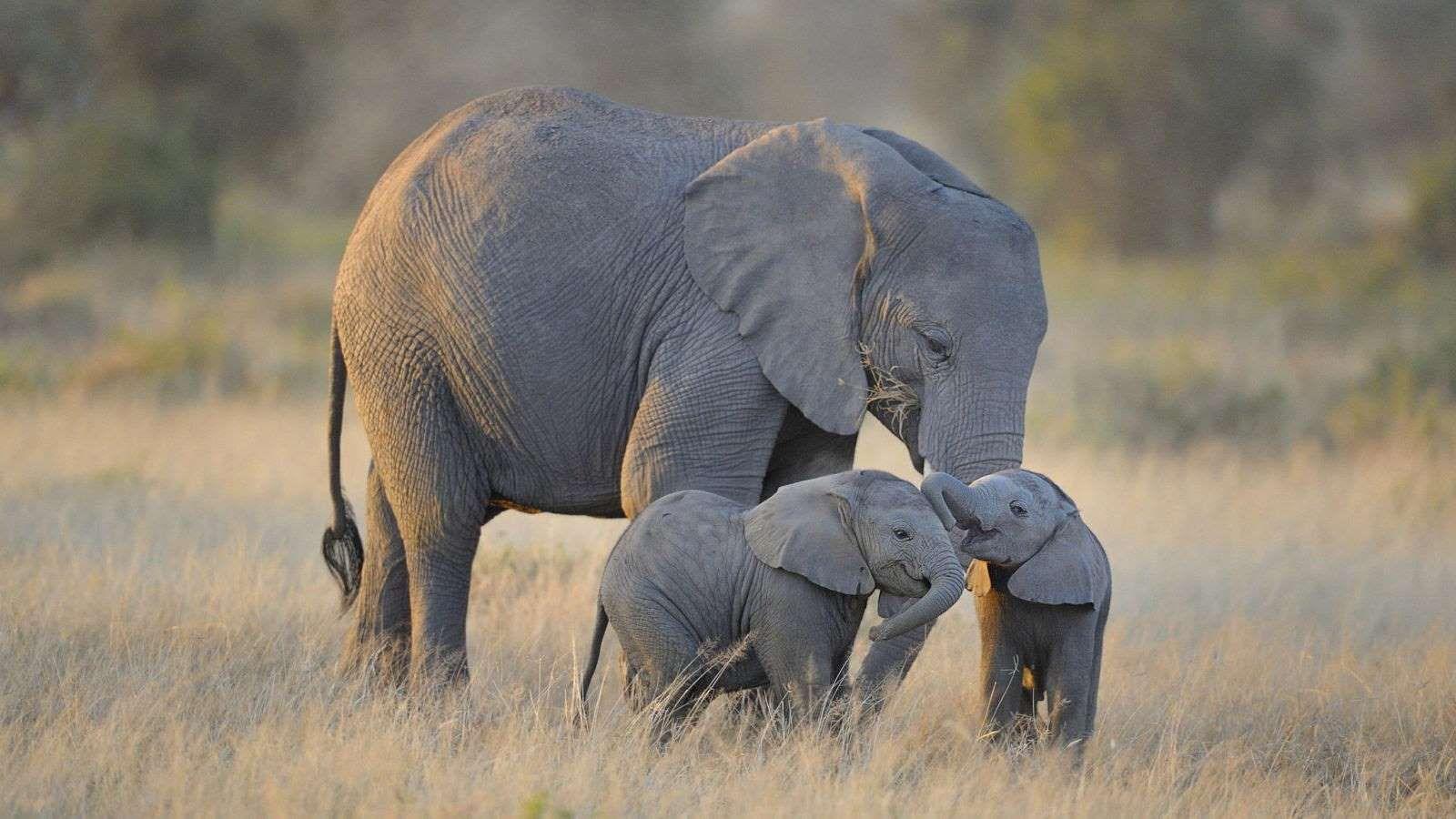 Es una frase hecha, pero también es verdad: los elefantes tienen una ...