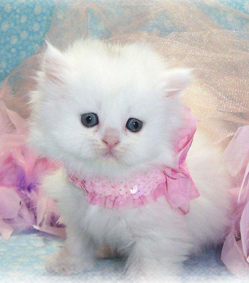 Pin By Julia Forbes On Feline Canine Friends Cute Baby Cats Cute Cat Wallpaper Pretty Cats