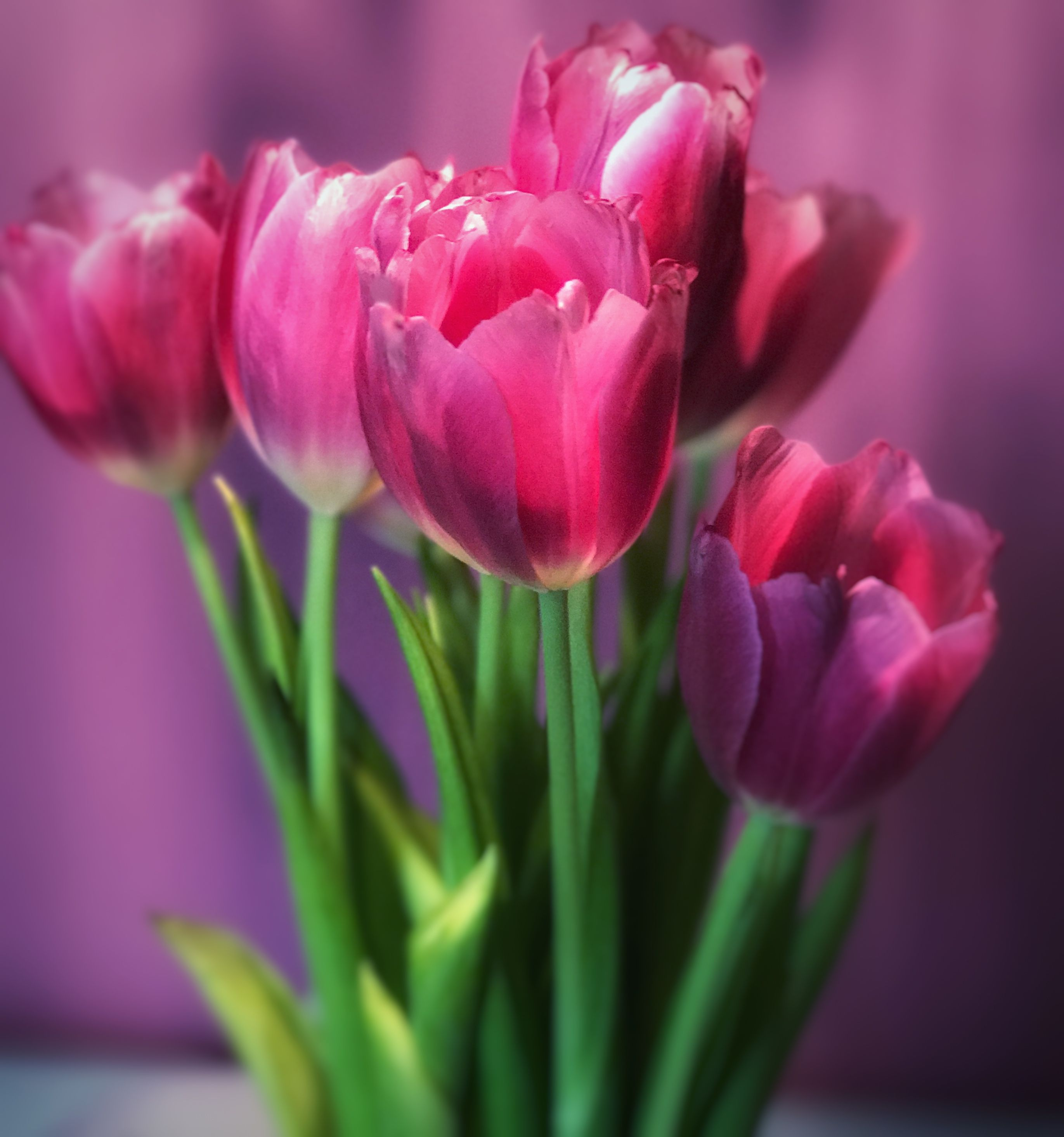Did you know about the meaning of pink flowers? They