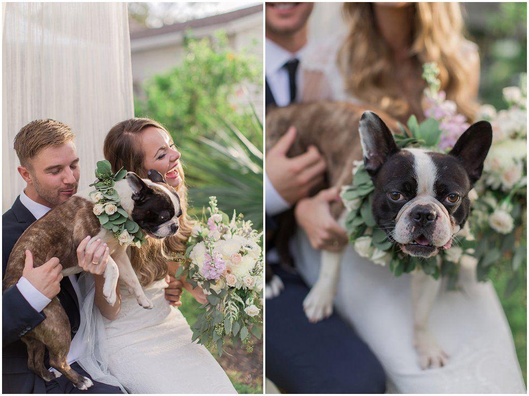 Night Swan Inn Wedding Cute French Bulldog Wedding Event Services