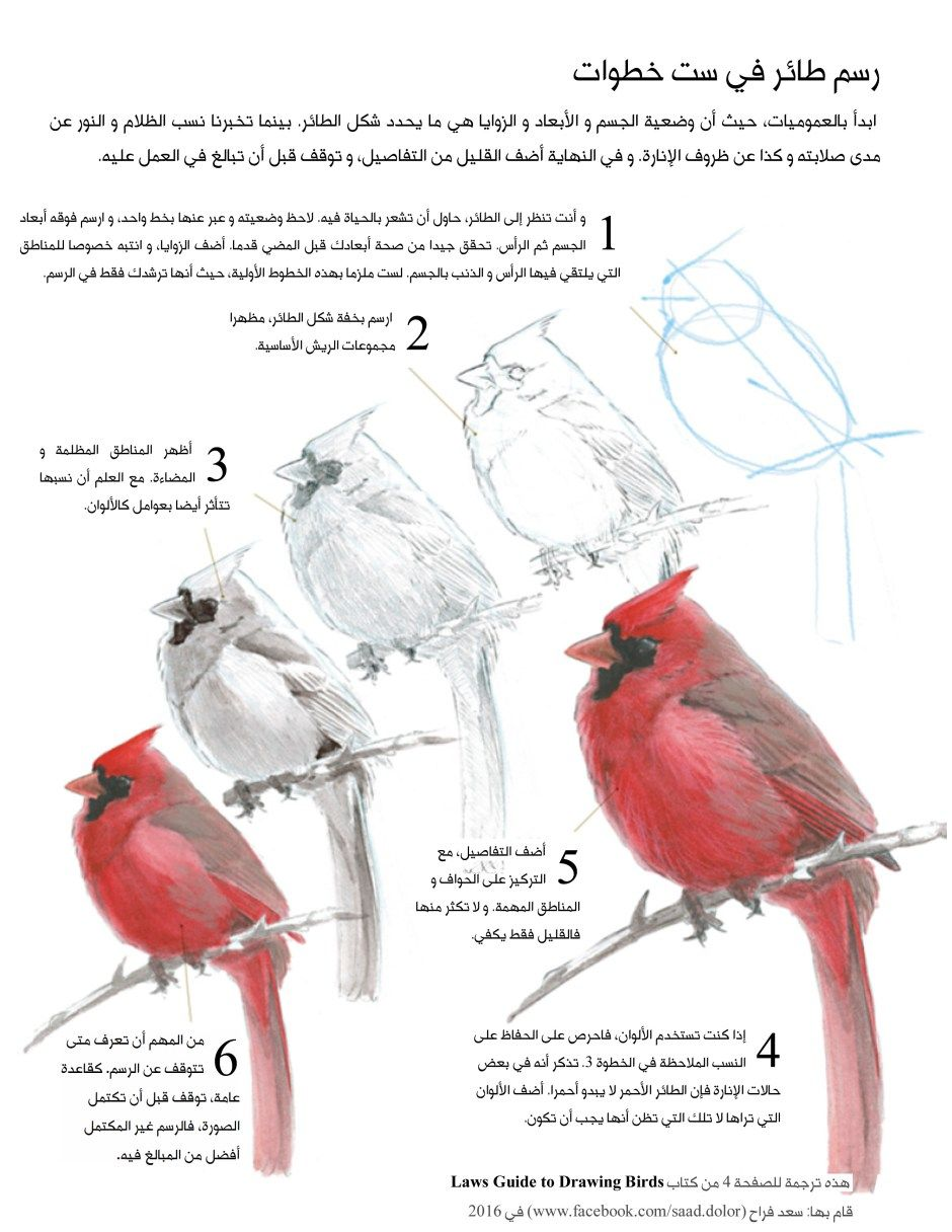 Drawing Birds In Arabic John Muir Laws Bird Drawings Bird Painting Acrylic Watercolor Bird