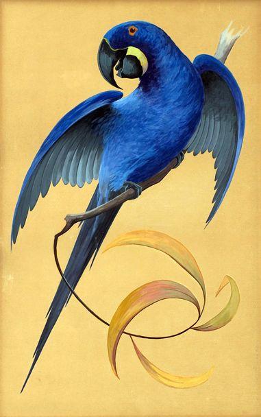 Blue Hyacinth Macaw Parrot - Bruno Ertz - 1908