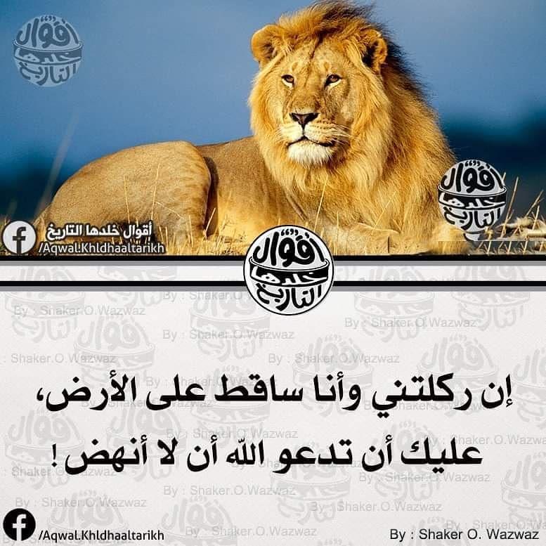 أقوال خلدها التاريخ On Instagram فضلا وليس أمرا تابعوا حسابنا الجديد أقوال غيرت العالم Toop Quotes Toop Quotes Toop Quotes Animals Lion