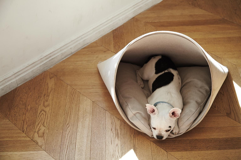 HOWLY_ DOG HOUSE&CUSHION.