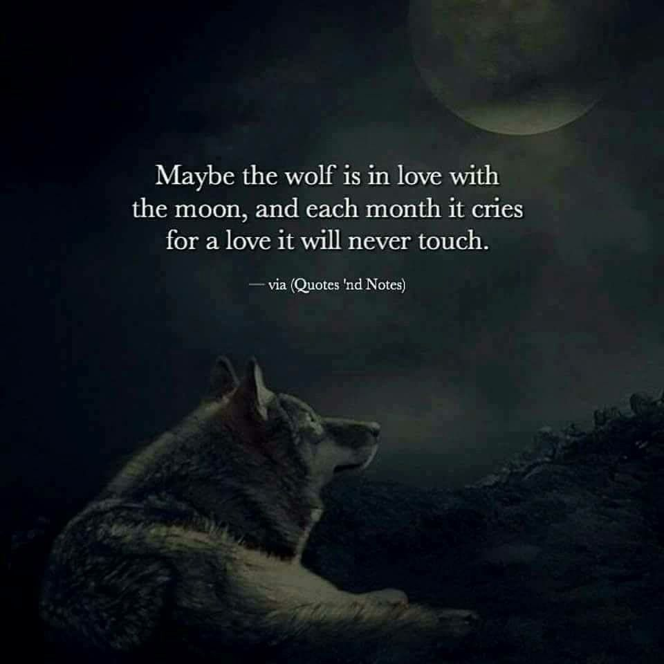 Love. Moon  Wolf quotes, Lone wolf quotes, Moon quotes