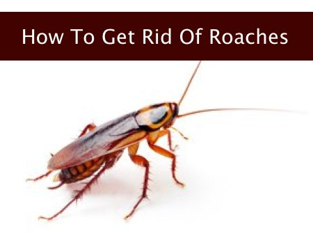 How To Get Rid Of Roaches In My Garden