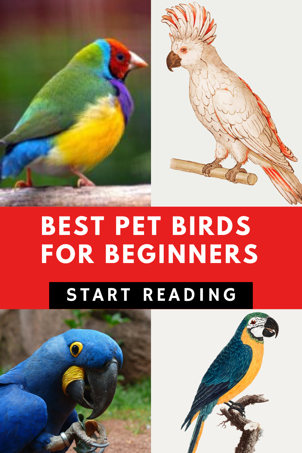Best Pet Birds For Beginners Best pet birds, Pet birds, Pets