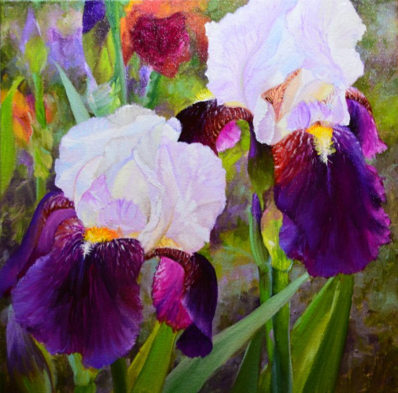"""""""Two Toned Iris's"""" is an 12x12"""" oil on deep profile canvas."""