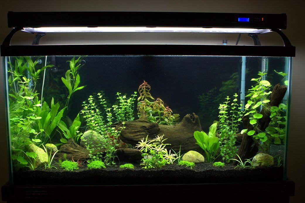 Black Background And Gravel Fish Tank Plants Tropical Fish Aquarium Aquarium Fish Tank