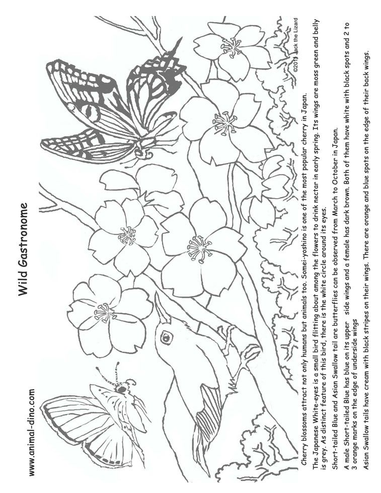 28++ Printable cherry blossom coloring pages info