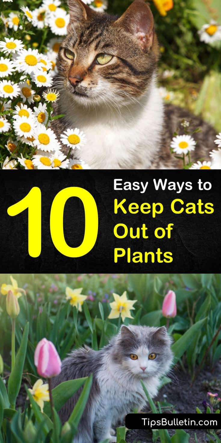 10 Easy Ways to Keep Cats Out of Plants in 2020 Plants