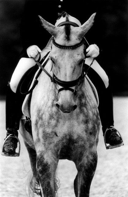 Symmetry Dressage horse photograph / by JulietRHarrisonPhoto