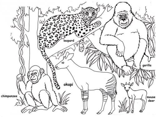 Jungle-coloring-pages-printable | www.shaqodoon.com | Pinterest