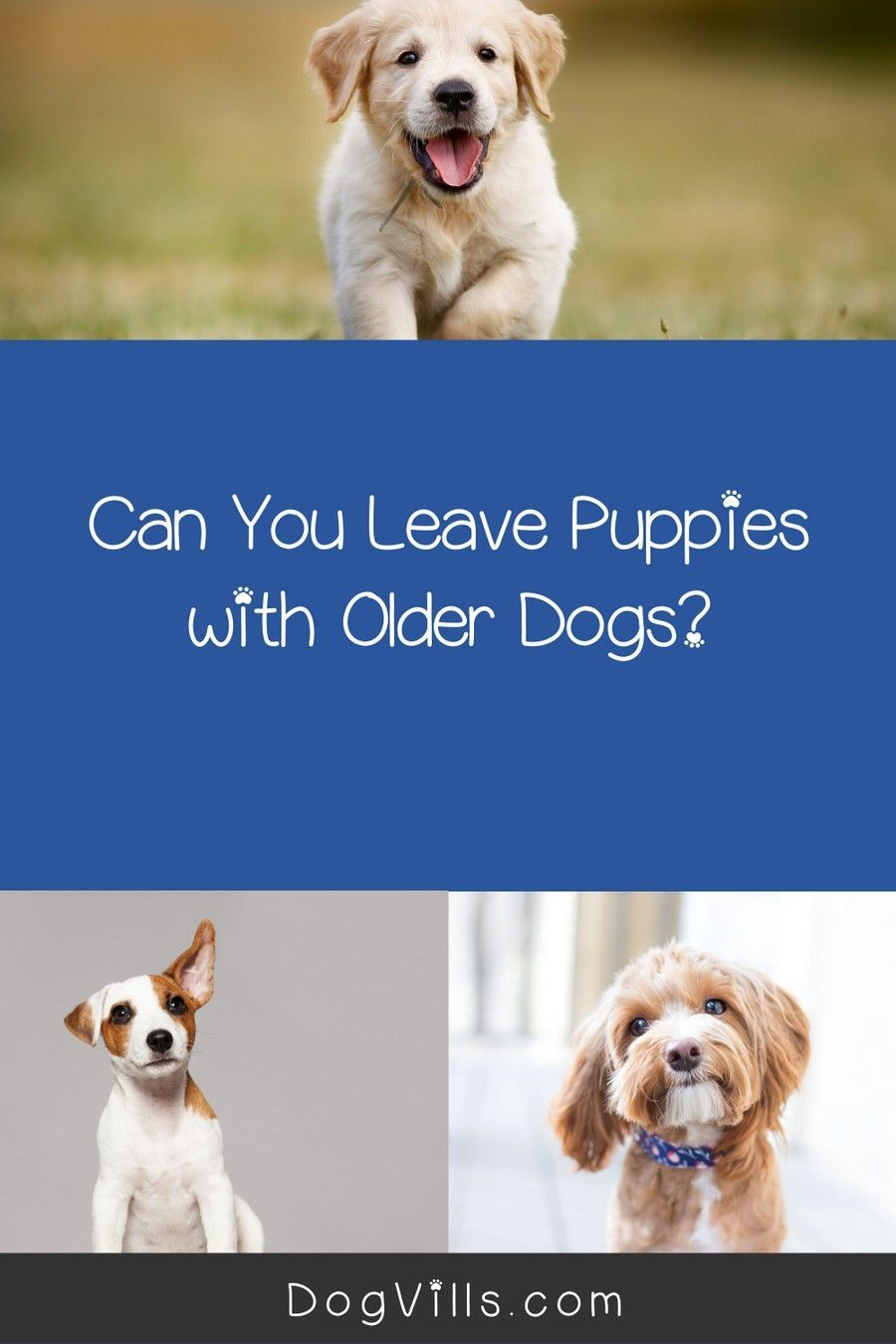 Leaving Your Puppy Alone with Another Dog Is it Okay? in