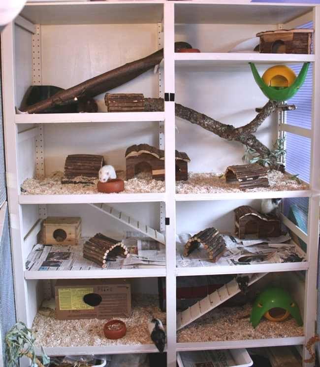 die besten 25 rattenk fig ideen auf pinterest chinchilla k fig hamster und. Black Bedroom Furniture Sets. Home Design Ideas