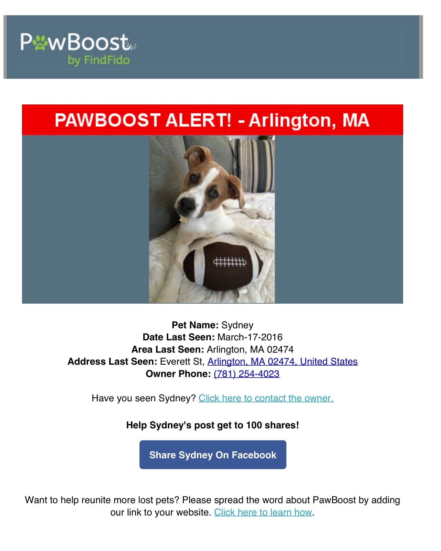 Lost Dog Named Sydney Arlington Ma Losing A Dog Pet Names Dog Names