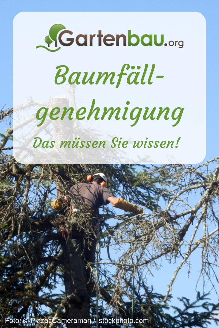 Baumfällgenehmigung Wann Sie Den Baum Im Eignen Garten Fällen