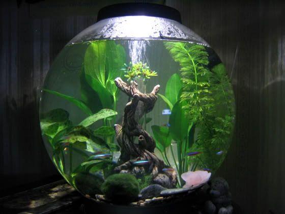Planted Biorb Biorb Fish Tank Fish Tank Fish Tank Decorations