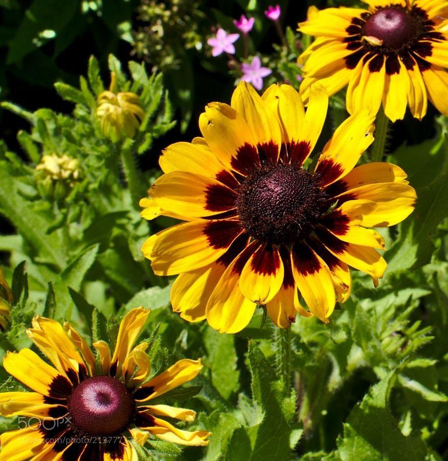 Very Pretty Flower Power Pinterest Sunflowers Beautiful