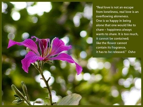 Best Osho Quotes On Love Life And Fear With Images