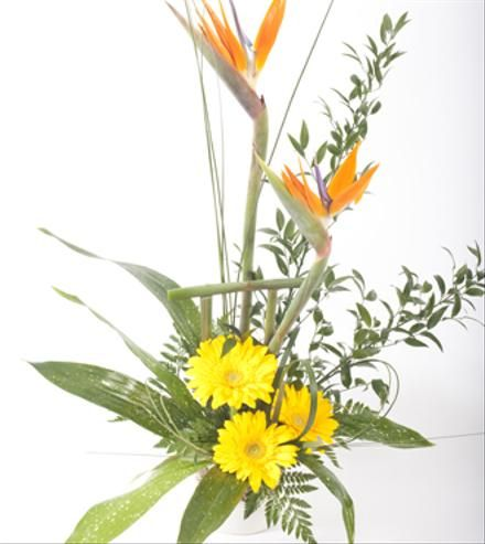 Modern tropical design showing originality and flair.......a great gift to send for many occasions.
