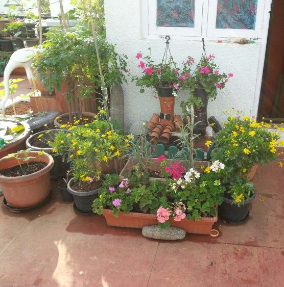 Terrace Gardening....Indian Homes