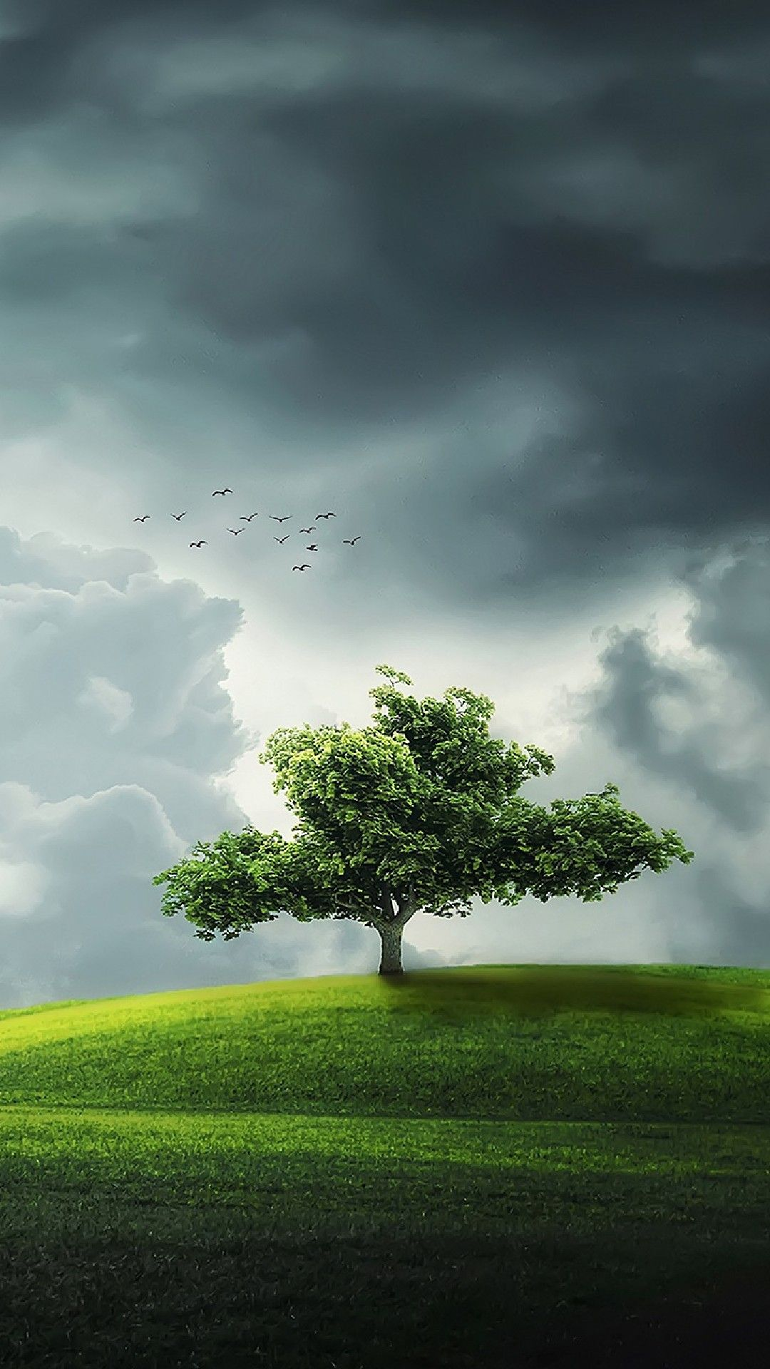 Alone Tree in Field Phone Wallpaper Lockscreen HD 4K