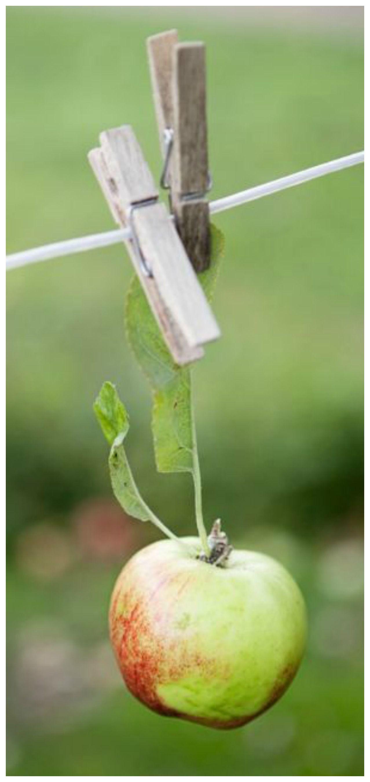 Épinglé par Tam's Boards ♥ sur Green Apple Cottage Pomme