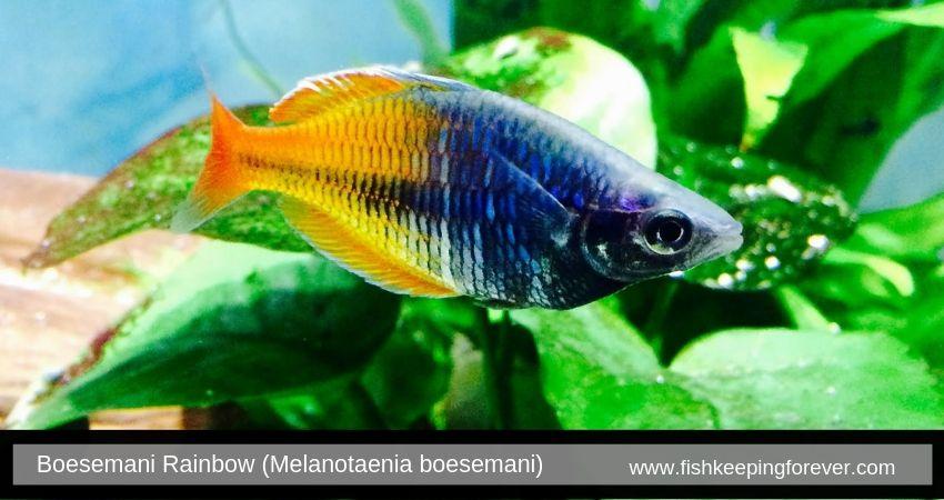 Freshwater Fish Tropical Fish Fish Tank Coolest Freshwater Fish Pet Shop Aquarium Best Freshwater Fish O Freshwater Fish Eel Like Fish Tropical Freshwater Fish