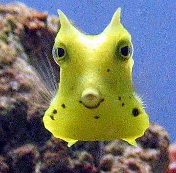 Weird Looking Fish Face 6