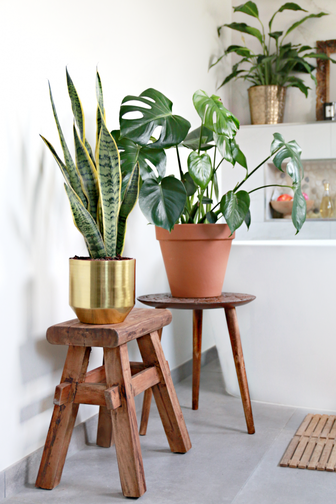BADKAMER PLANTS - planten in de badkamer bij blogger Serena Verbon ...