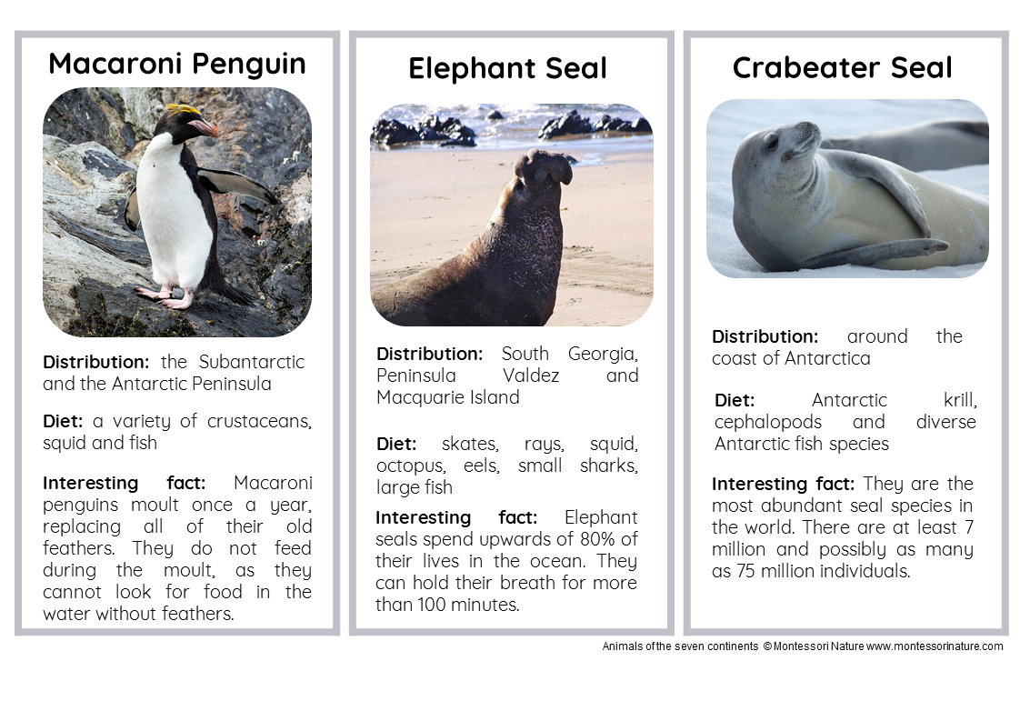 15 Animals Of Antarctica