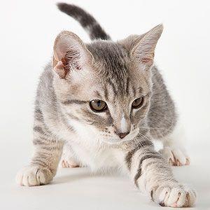 50 Creative Calico Cat Names   Cats   Funny cat names