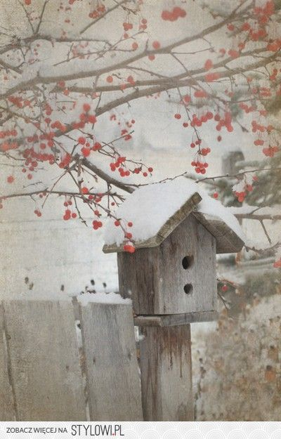 Birdhouse with winter snow and a food supply of berries overhead.