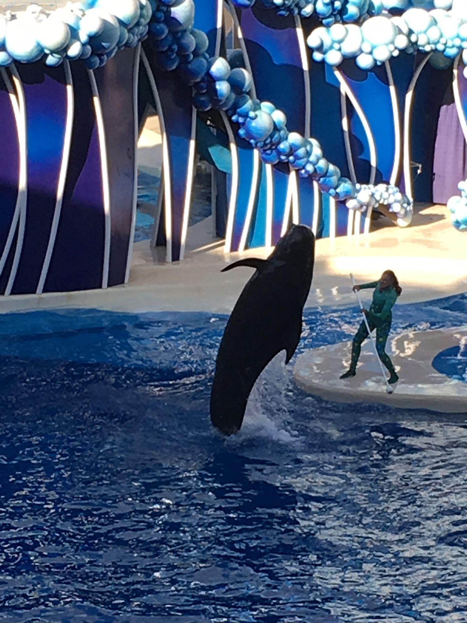 Dolphin Theatre at Sea World, Orlando Sea world
