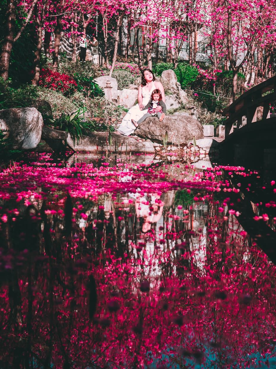 Photographing The Cherry Blossom Valley Of Dali China Jake And Dannie Cherry Blossom Blossom Cherry Blossom Tree