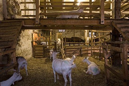 post image for goat shelter plans | goat shelter plans | pinterest