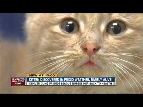 Kitten Found Frozen In The Snow Gets Chance At Happily Ever After Pet360 Pet Parenting Simplified Animal Rescue Pet Parent Kittens