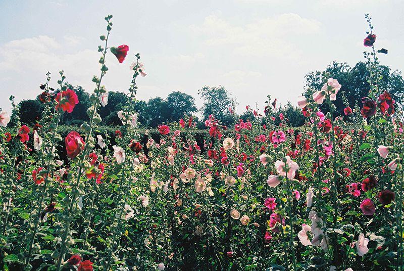 Comment cr er un jardin de printemps jardin de - Comment faire un jardin vertical ...